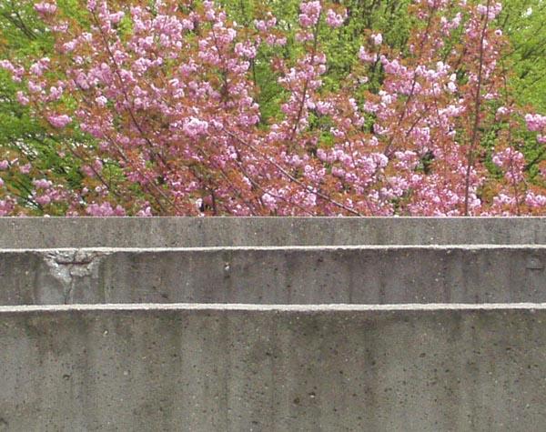 Fleurs et béton